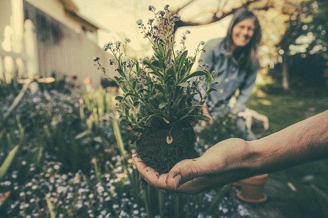 Gardening photo