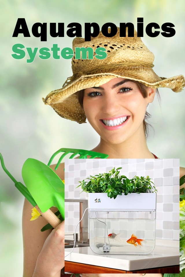 Aquaponics Is A Technique Of Developing River Fish, Natural And Organic Homegrown Vegetables, And Also Organic Fruit Within One Enclosed System.