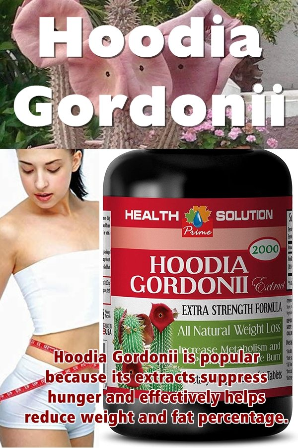 Hoodia Gordonii Is Now Considered One Of The Most Effective Natural Appetite Inhibitors In The World