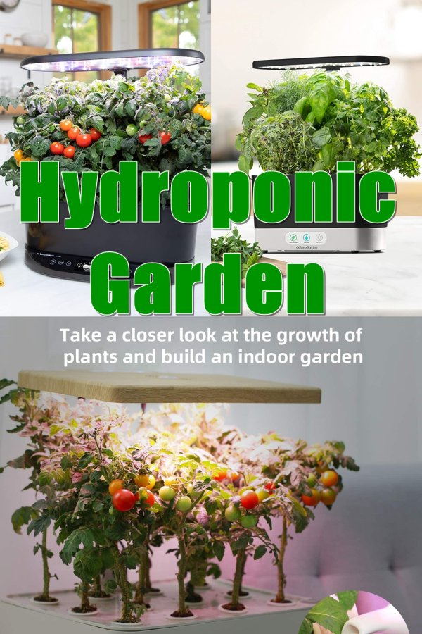 The Best Plants To Grow Hydroponically Are Typically Plants That Grow Quickly, Plants That Go Bad Quickly If You Buy Them At The Supermarket, Or Plants Whose Supermarket Varieties Are Outclassed My Home-grown Alternatives, Such As Tomatoes.