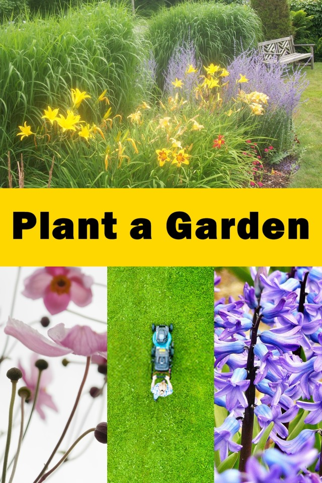 Having Decided To Plant A Garden, There Are A Few Things To Take Into Consideration. How Much Garden Space Is Available? Is The Soil Prepared And Ready To Plant?