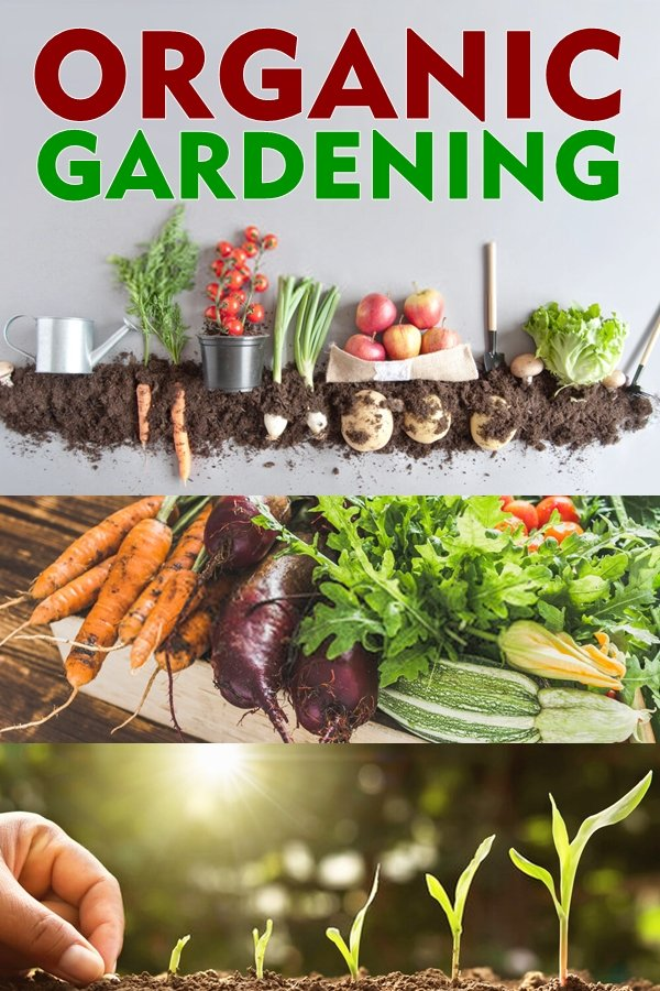 Organic Gardening- What Does Organic Mean?